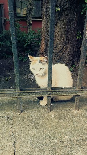Санкт Петербург,streetcat waiting for sausage Relaxing Hello World In Russia. :) The Street Photographer - 2015 EyeEm Awards