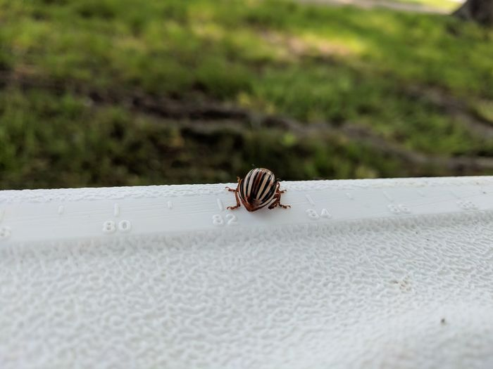 Close-up of snail on the wall