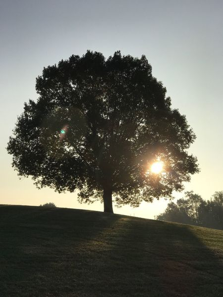 My tree up on the hill. 1 Tree Nature Landscape Tranquility No People Field Beauty In Nature Sun Sunlight Scenics
