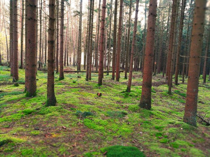Augustdorf Dünenfeld Heidelandschaft Kreis Lippe Ostwestfalen-Lippe Senne Sennelandschaft Tree Day Heide Natur Pur Nature Nature One No People Outdoors Ölbach Ölbachtal