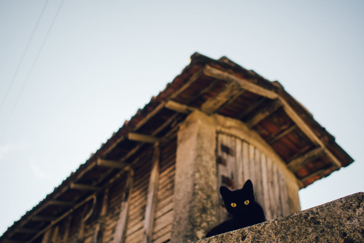 Low angle view of black cat on wall