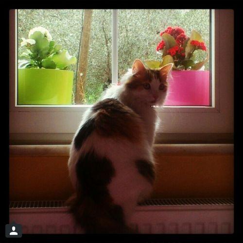 Cat Catlovers Hi! Taking Photos Hello World Enjoying Life