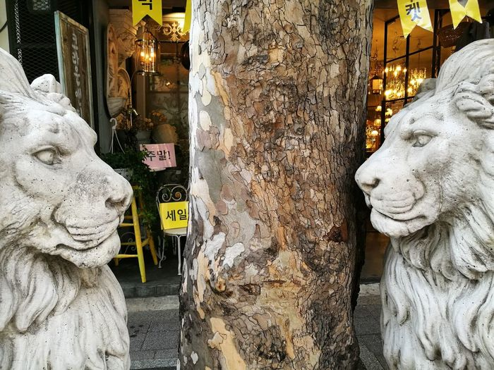 Face Head On Shop Front Textured  Lion Head Tree Trunk Itaewon Face To Face Strength Fierceness Statue Sculpture Human Representation Art And Craft Architecture Close-up Built Structure Street Art Sculpted Non-western Script Bark Stone Material Plant Bark Carving - Craft Product Art