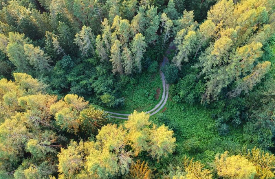 Forest Djispark Birds Eye View Green Dji Dronephotography Road Drone Landscape Drone View Droneshot Djiphotography Droneart Lines And Shapes Slovenia Flower UnderSea High Angle View Tree Plant Green Color Growing Empty Road Greenery Flora Vegetation Woods Countryside