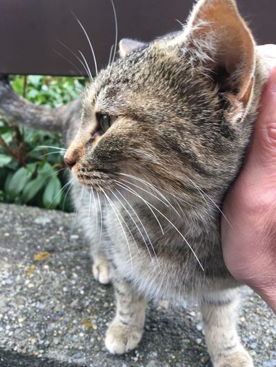 Feline Cat Meow