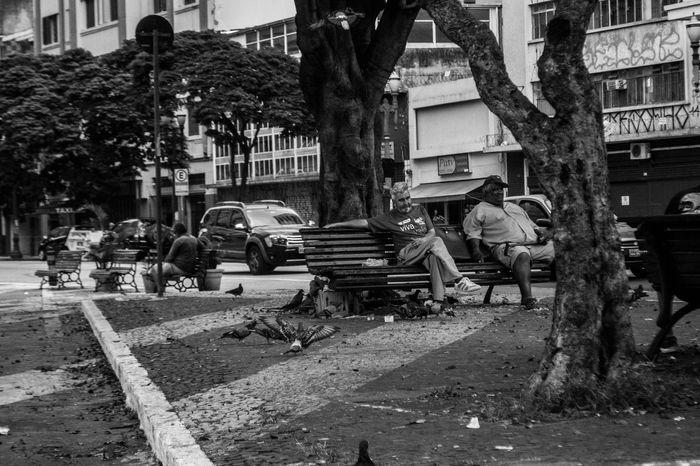 Centro Streetphoto_bw Artrua Photography Themes Fotoderua Rua Sao Paulo - Brazil SP Art Photography Street Photography Streetphotography Real People Men Two People Saopaulocity Saopaulo Photographing Fotografia Photo City Tree