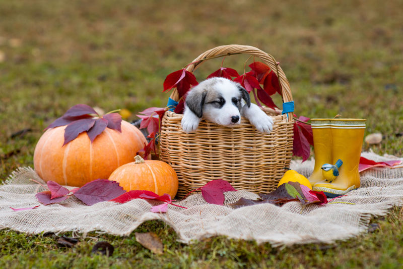 High angle view of puppy in basket
