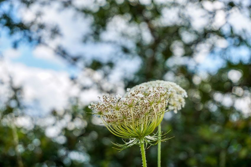 Plant Beauty In Nature Nature Close-up Focus On Foreground Growth No People Day Tree Flower Green Color Outdoors Flowering Plant Freshness Fragility Tranquility Vulnerability  Sunlight Low Angle View Sky