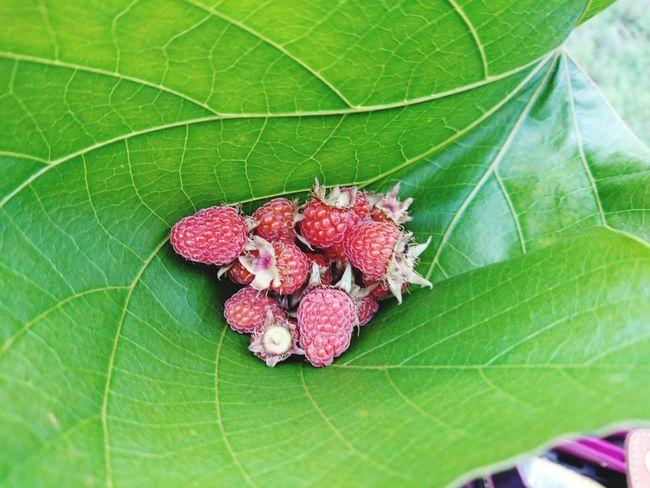 Respberries