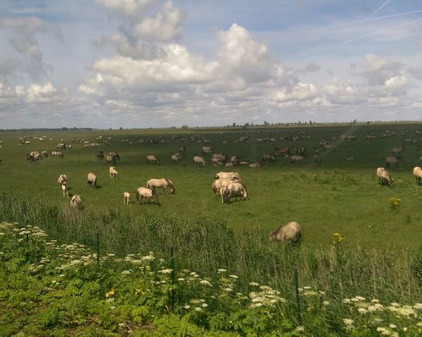 Traveling By Train Wild Horses Natuur-in-lelystad