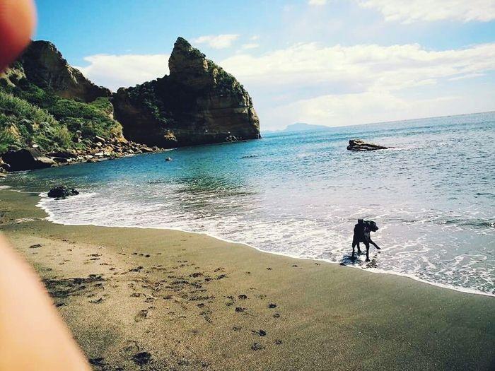 Love Sweet Sea Dog Love Pet Boss Wonderful Italy Paradise Magic View Naples Magic Black Art Dog