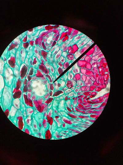 Scientist 10×100 Cells Colorfull Small Microscope 10x10 Lab That's Me Close-up