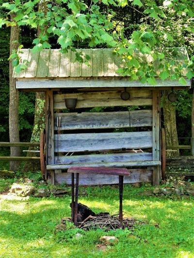 Country Life Bench Fire Pit Indianapolis, IN Absence Architecture Bench Day Grass Green Color Growth Land Leaf Logs Metal Grate Nature No People Old Outdoors Plant Plant Part Repurposed Wood Seat Tree Wood Wood - Material