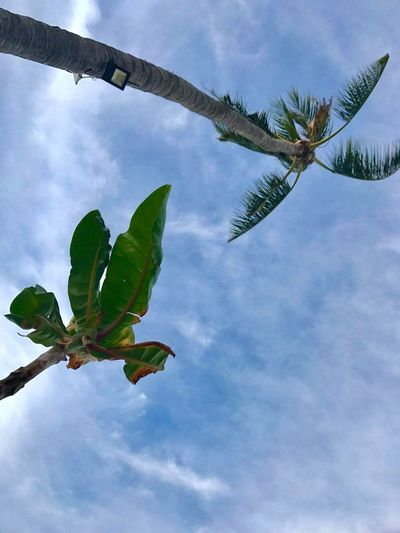 palms on Phi Phi Islands Phiphiisland Phiphidon Thailand Tree Branch Leaf Sky Plant Close-up Green Color Cloud - Sky Animal Themes