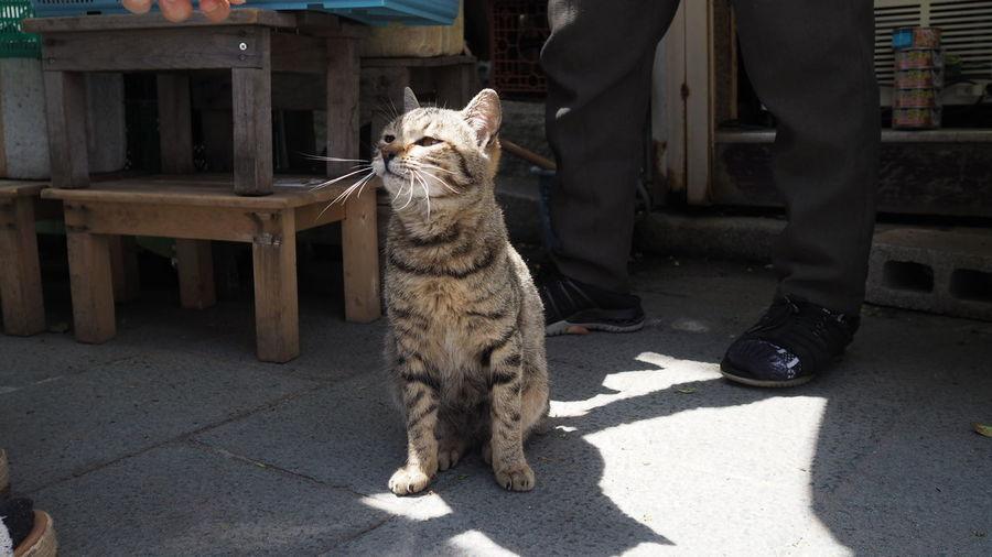 Sitting Domestic Cat Shadow Alertness Sunlight Animal Themes Tabby Cat