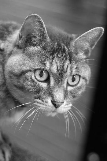 let's walk about! ねこ Playing With The Animals Cute Mycat KAWAII EyeEm Best Shots ダンディ Cat Dandy Monochrome