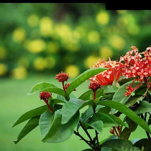 Early Morning RainyDay Flowersgarden Flowergram Naturegram Instagoo Instalovers IGDaily Instacapture Instadoubletap Followgram Comment4comment Photo4Follow .