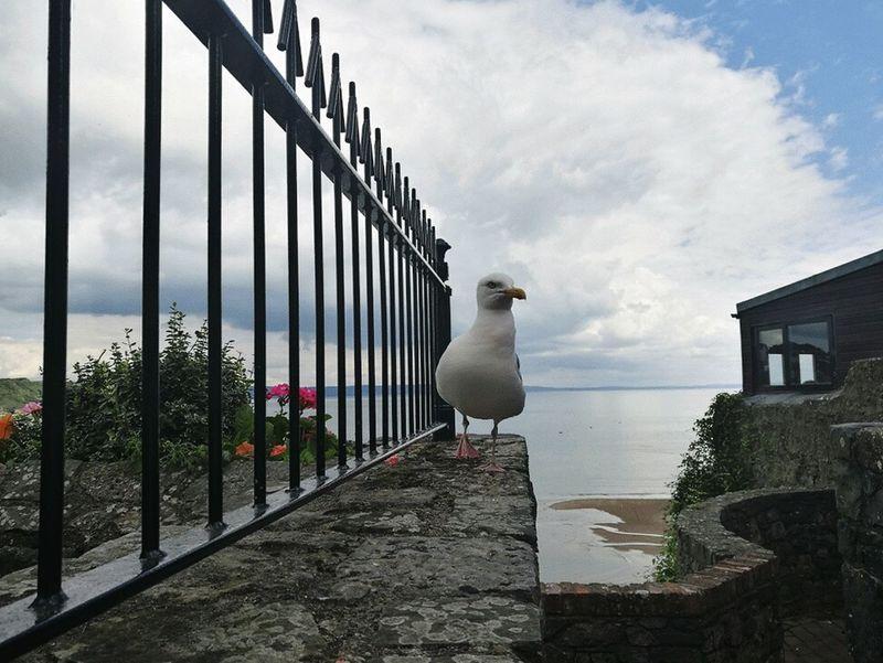 Seagull Ocean View