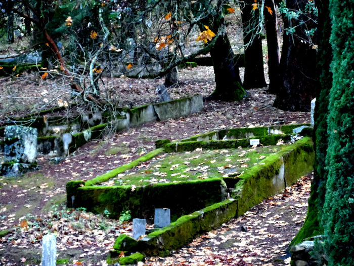 Background Cemetery Memories Moss Old Once Loved Ruined Stone Tree Feelings Weathered Nature Taking Over