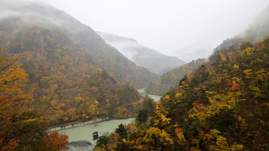 Scenic view of river by trees during autumn