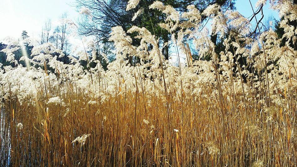 Finland♥ Finland Heinola PhonePhotography Photooftheday Photo Photography Nature Photo♡ Photo Of The Day Life Photographer Day Lifestyles