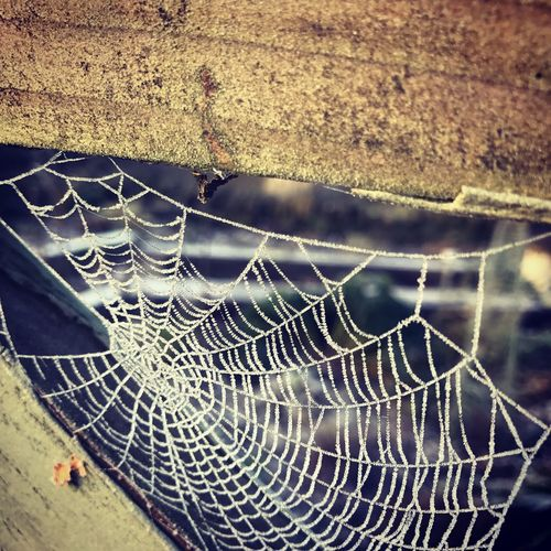 Spider Web Close-up No People Outdoors Fragility Day Web Nature Water Perspectives On Nature