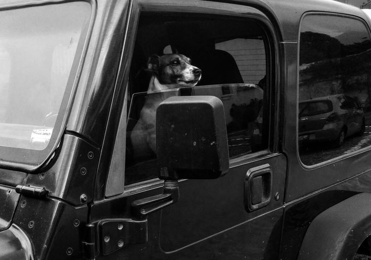Animals Dogs Transportation Car Travel From My Point Of View From My Perspective Still Life Photography Hello World Fine Art Urban Geometry Monochrome Photography Urban Photography Urban Exploration Streetphotography Street Photography Still Life Dog Photography Dogs Of EyeEm Best Friend Animal Animal Photography Jeep Wrangler  Jeep Dog Love
