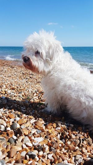 Water Pets Wave Sea Beach Dog Beauty Summer Sky Pebble Beach
