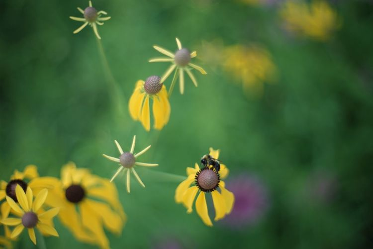Animal Themes Animals In The Wild Beauty In Nature Bee Flower Fragility Growth Insect Nature One Animal Petal Pollination Wildlife Yellow
