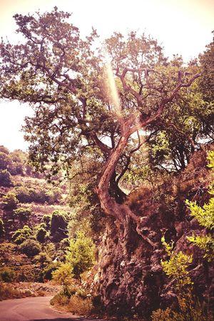 griechischer alter Olivenbaum My Favorite Photo Shadows & Lights Wood - Material Olivegarden Baum 🌳🌲 Grichenland The Great Outdoors - 2017 EyeEm Awards
