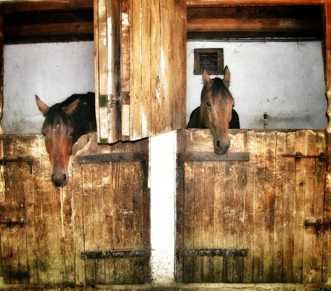Animal Love Animal Photography Animal Themes Animal_collection Beautiful Animal Portrait. Beautiful Animals  Brown Horses Closed Door Closed Up Eye4photograghy EyeEm Gallery EyeEm Nature Lover EyeEmBestPics Horses Horsestagram Nature Photography No People Waiting For The Ride