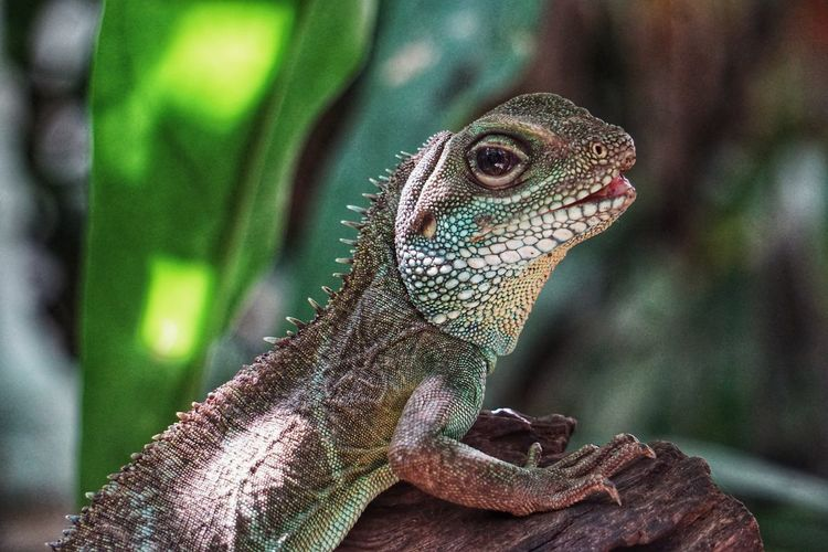Zoo 2019 Niklas Storm Juli Reptile Portrait Lizard Close-up Animal Skin HEAD Skin Animal Scale Animals In Captivity My Best Photo