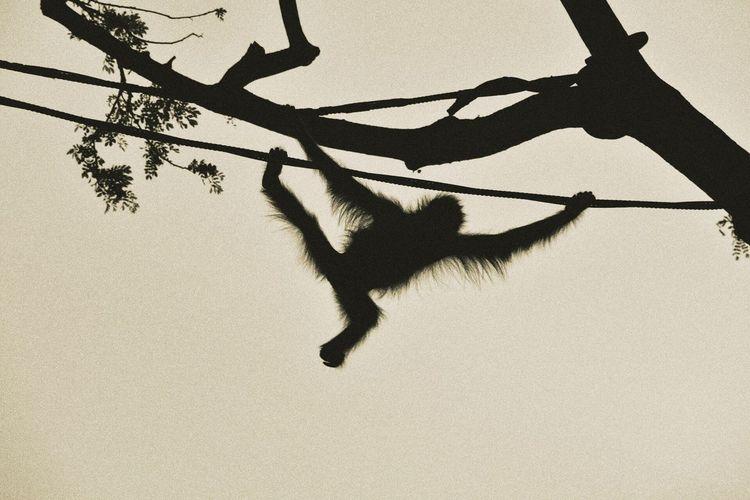 Showcase March Animals Zoology Monkey Hi! Cheese! Enjoying Life