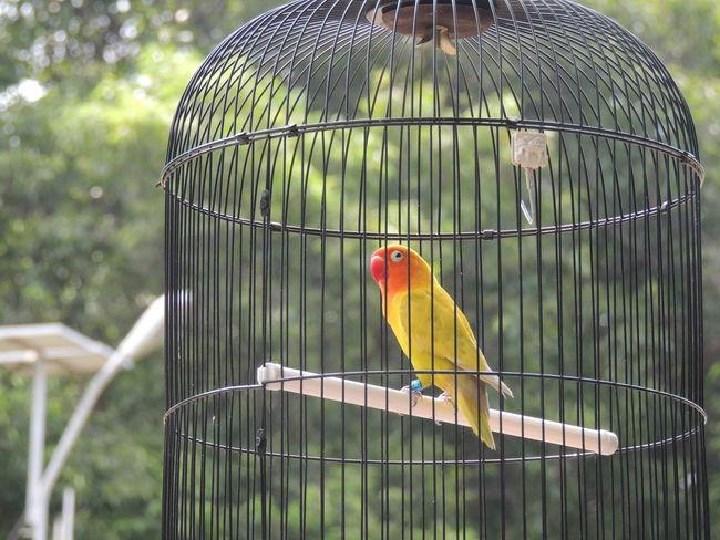 Beautiful but Sad Bird Birds Caged Cagedbirds Colourful No Edit/no Filter The Purist (no Edit, No Filter) in Keraton Kasepuhan , Cirebon  , INDONESIA
