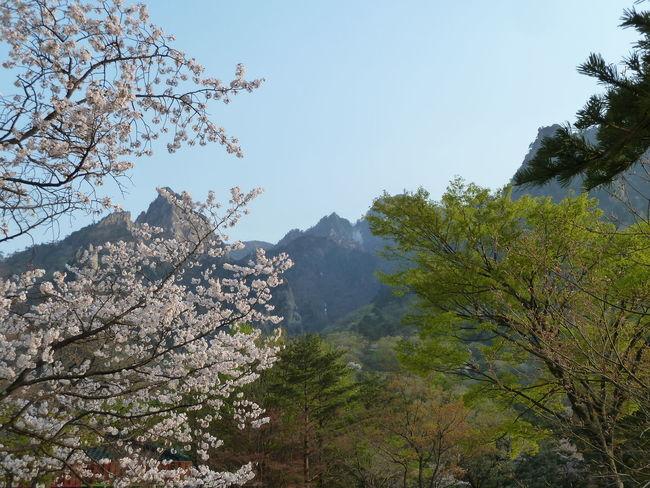 NatureReserve Beauty In Nature Mountain Mountain Range Nature Outdoors Scenics Sky Soraksan Southkorea Tranquility Tree
