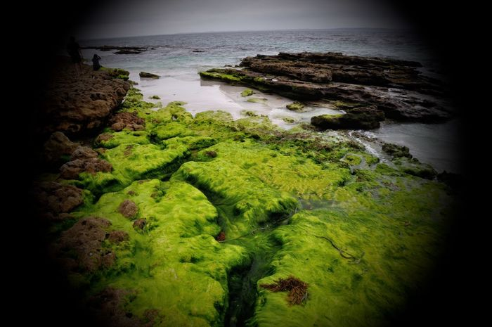 Beach Beauty In Nature Day High Angle View Horizon Over Water Moss Moss And Lichen Nature No People Outdoors Scenics Sea Vignette Water