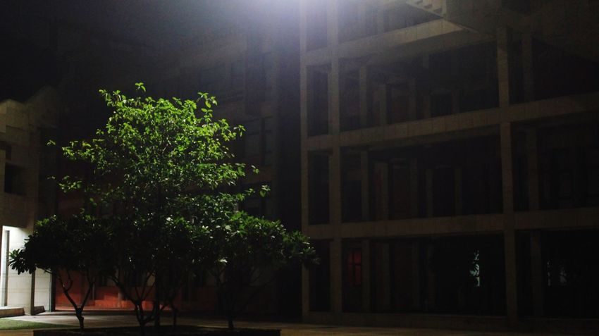 The leaf in the brick #India #nightshot #photography #travel #KicksOfTheDay #Nature  Tree Architecture Night No People Outdoors City