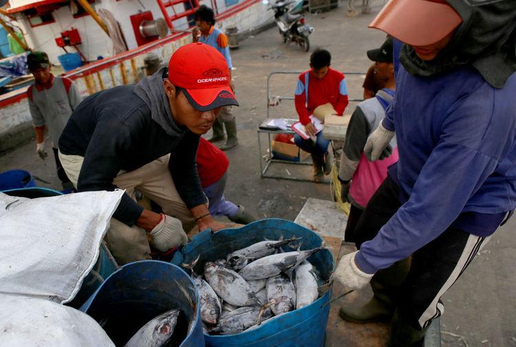 Indonesian Marine fish catches Huntingseason Photojoutnalist Photojournalism Fish Economic Sea Food
