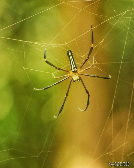 Spider Web Spider Insect Animal Wildlife Animal Leg One Animal Animals In The Wild Nature Web Survival Focus On Foreground Animal Themes Fragility No People Close-up Awe Outdoors Full Length Day d3400 Like4like Photography Themesd3400 Nikon Photography The Week On EyeEm Like4like Bhopal