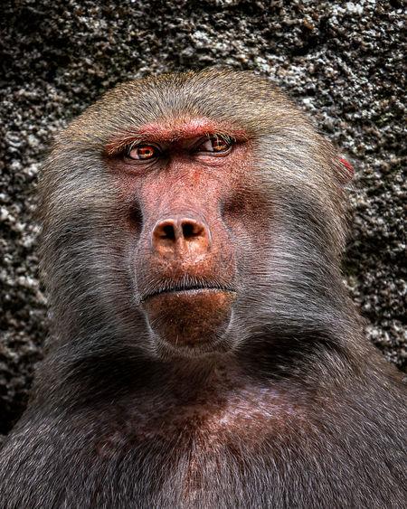 Close-up portrait of face