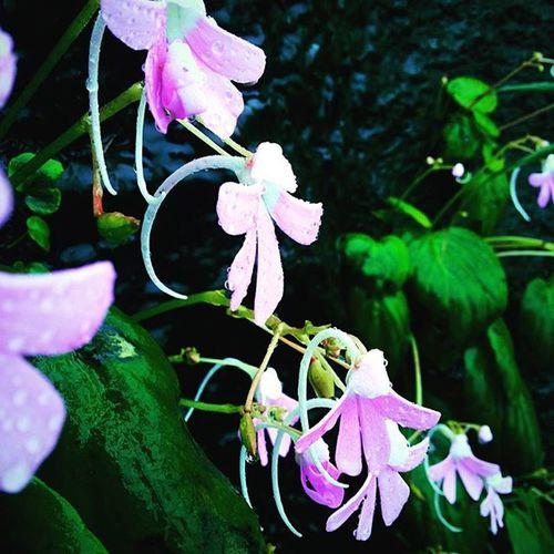 Flowers Rain RainyDay Awesome Alive  Ratangad Beautiful Nature Naturelovers Mobilephotography Samsung