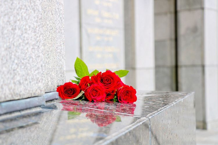 Close-up of red roses on wall ledge