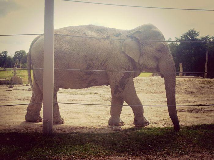 Animaux Elephant