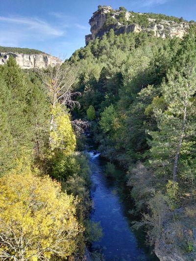 Tajo Rio River Arboles Trees