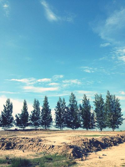 Pinustree, Sea, Beach, Landscape, Bengkalis,