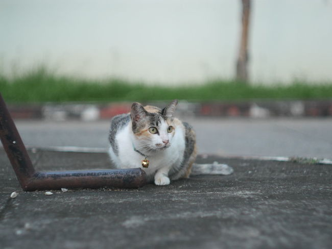 Animal Animal Themes Cat Cats Day Domestic Animals Kitten Mammal Nature No People One Animal Pet
