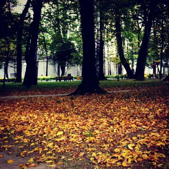 Yellow Autumn ! Vinnitsa Vnua Igukraine PhotoOfTheDay sirsergephoto