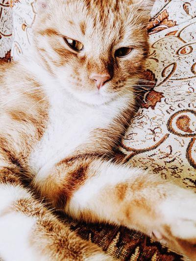 Mycat Mylove Mydoughter Cat Cat♡ Cute Cute Pets