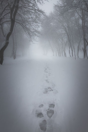 The path Bare Tree Beauty In Nature Branch Cold Cold Temperature Day Deep Snow Fog Frozen Landscape Nature No People Outdoors Scenics Sky Snow Tranquil Scene Tranquility Tree Weather Winter