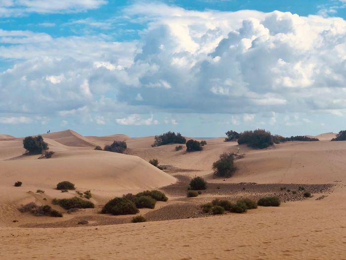 Dunes Land Sky Landscape Cloud - Sky Scenics - Nature Environment Tranquil Scene Desert Tranquility Beauty In Nature Sand Non-urban Scene Nature Plant Arid Climate Day Outdoors No People Tree Climate